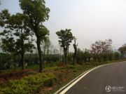 武汉中国健康谷外景图
