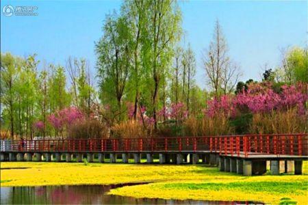 川网国际花园一期