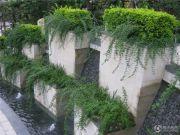 香樟林实景图