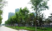 万锦・红树湾实景图