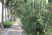 绿洲豪苑配套图