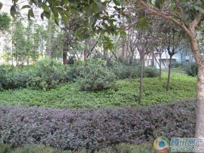 卫星半岛花园-楼盘详情-重庆腾讯房产