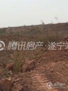遂宁天鹅湖实景图