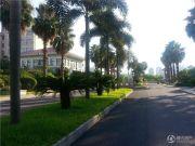 棕榈泉花园实景图