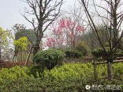 宏泰・尚阳城外景图